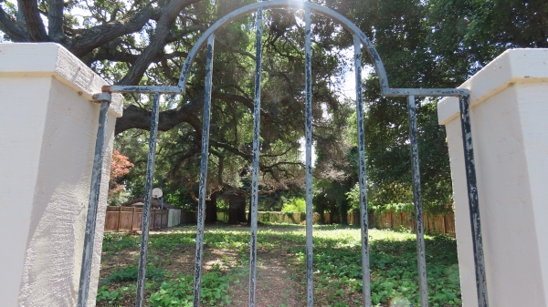 Vacant property listed for sale after sitting undisturbed for decades